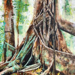 The Fig Tree, Henrietta Creek. Queensland, Australia.
