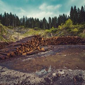 La destrucción ambiental y el riesgo de nuevas pandemias