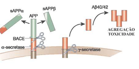 Colesterol, APEɛ4 y estatinas: implicaciones en la enfermedad de Alzheimer