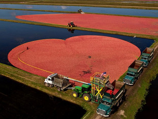 """A """"hearty"""" look at Wisconsin cranberries"""