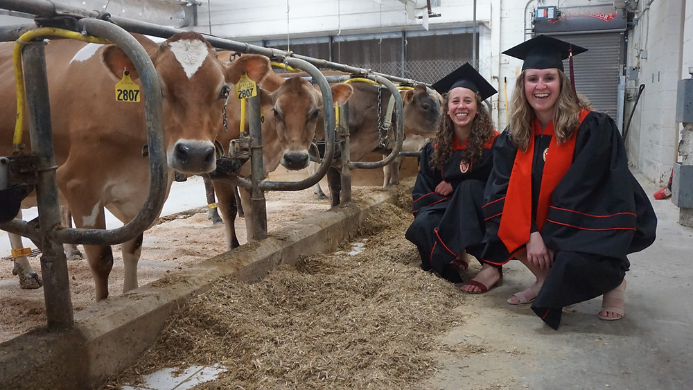 College graduation with a few of the Jersey cows at the UW Dairy Cattle Center and my home for three years.
