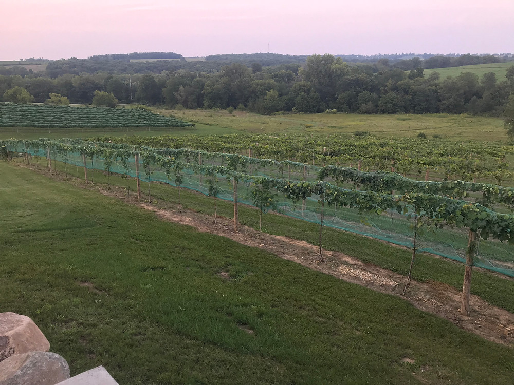 Hawk's Mill Winery in Green County offers agri-tourism opportunities.