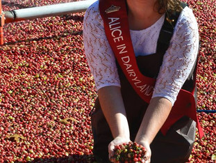 Cranberries make a big splash in Wisconsin