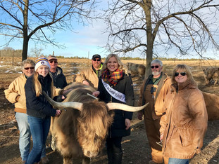 Four T Acres - Scottish Highland Cattle