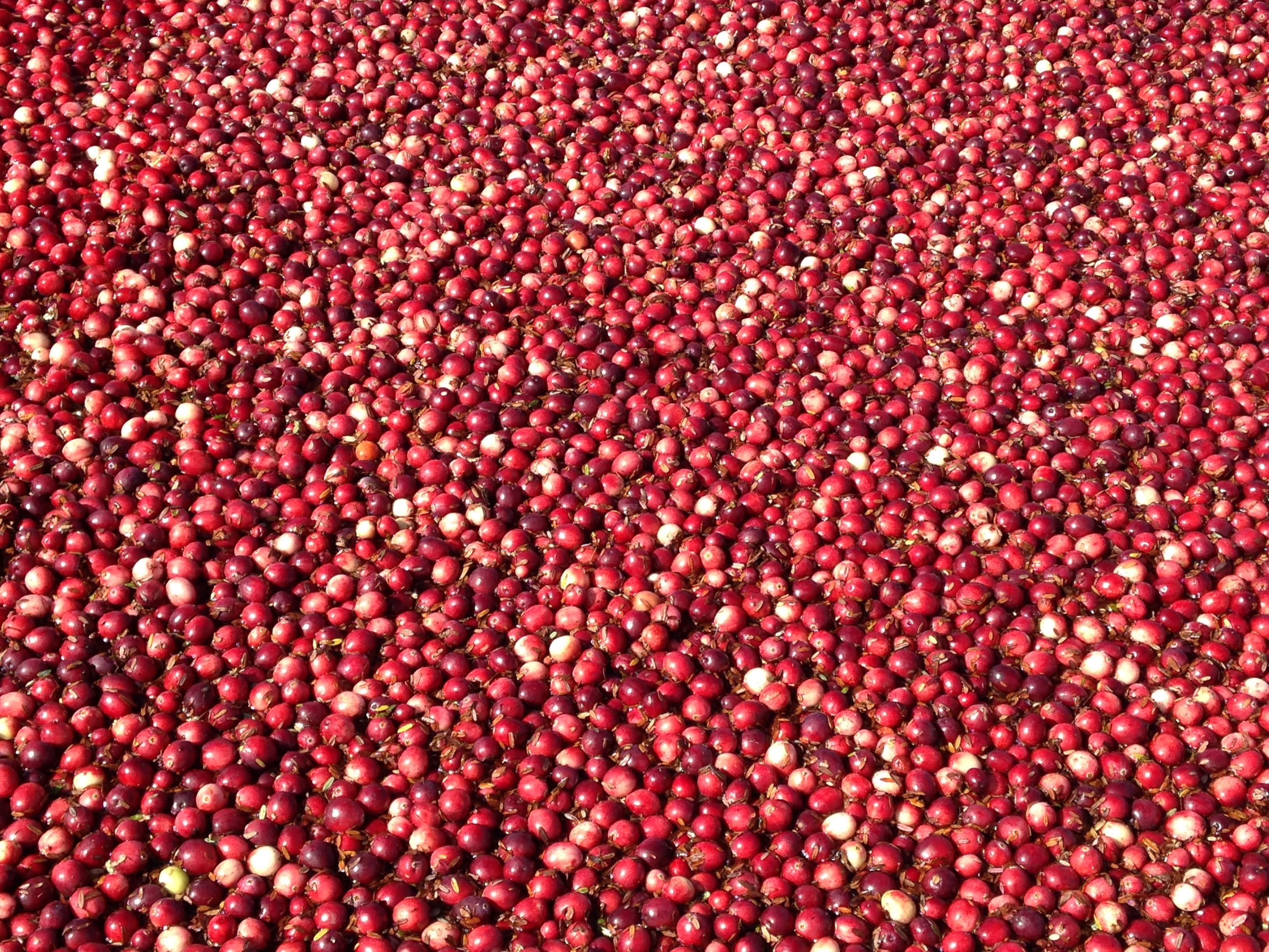 Wisconsin Cranberries