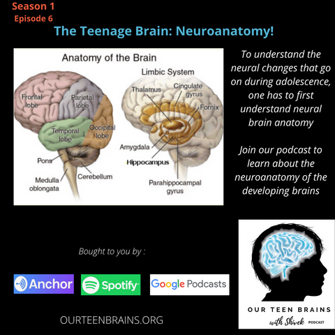 The Teenage Brain: Neuroanatomy!