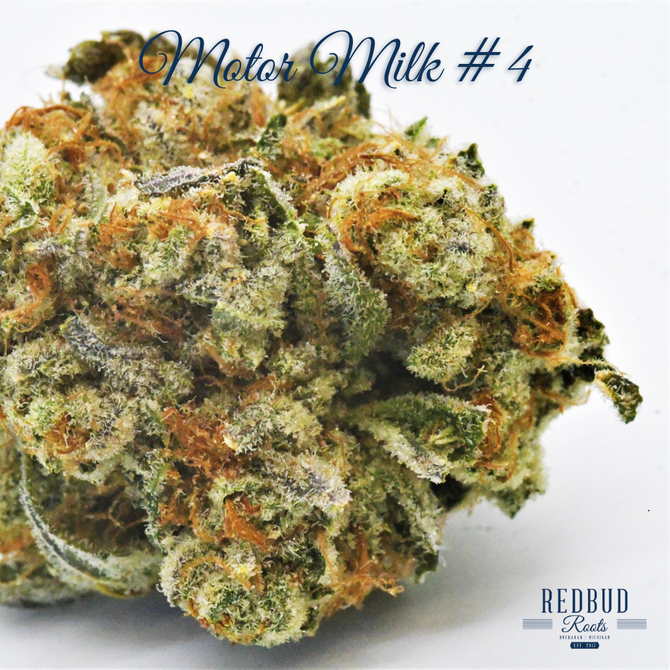 Strain of the Month, March 2021: Motor Milk
