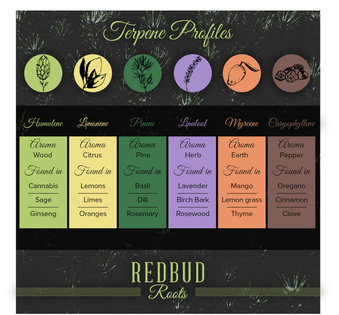 The Nose Knows: Major Terpenes in Cannabis