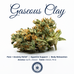 Strain of the Month: Gaseous Clay