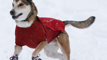 Winterizing Pets..Essential Things You Need to Know to Help Your Pet through the Winter.
