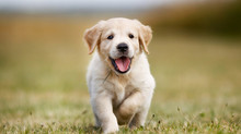 3 Tips to Help Potty Train You Puppy
