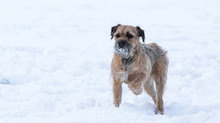 How cold does it have to be before your dogs feet start to hurt?