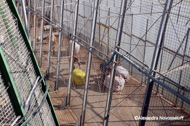 10-Melilla_Commercer avant tout_2013