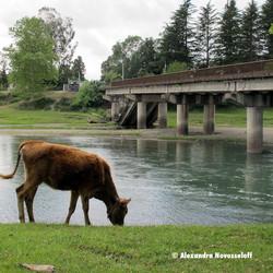 91-AN-Ingouri-Orsantia Bridge_2013