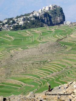 83-Terrace Fields - North West Yemen