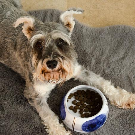 Commissioned Dog Bowls