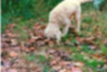 MOLISE B&B Agnone Searching truffles