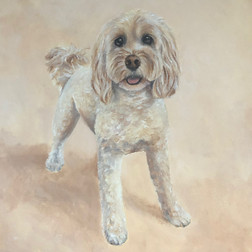 Cockapoo Oil Painting.jpg