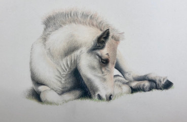 Foal - Colour Pencil.JPG