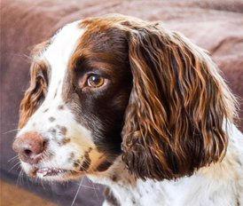 Jasper - just right.jpg