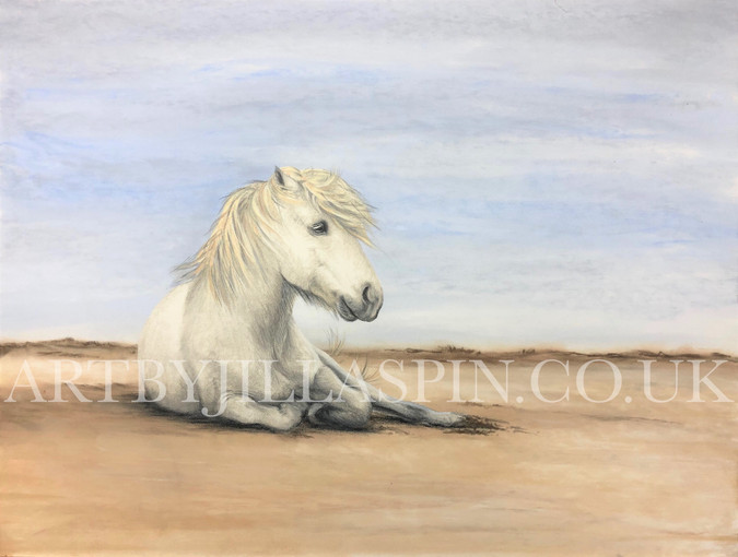 Pony on a beach finished watermarked bri