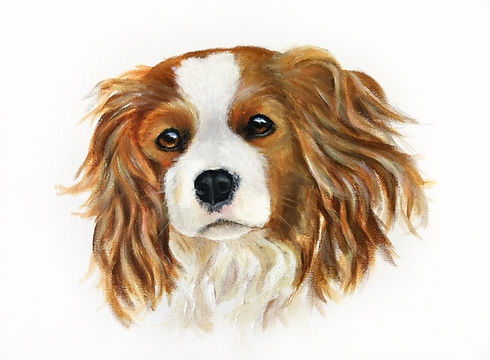 King Charles Spaniel Pet Portrait2.jpg