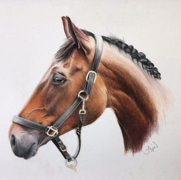 Colour pencil Chestnut Horse.jpg