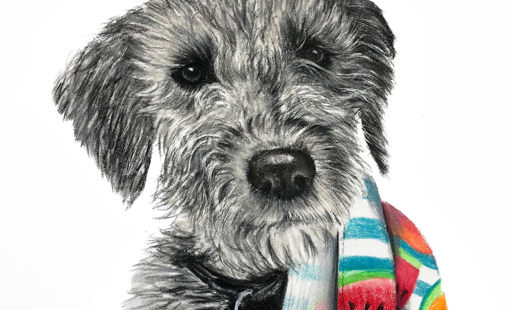 Bedlington Terrier Pet Portrait