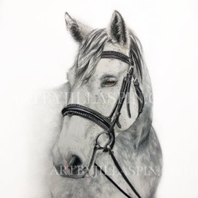Dappled Grey Horse Limited Edition Print