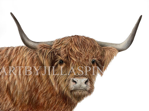 Highland Cow - Original Art