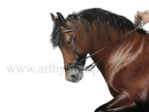 Andalucian horse - Limited Edition Print