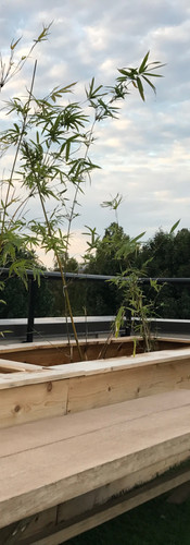 Custom Rooftop Bamboo Containers