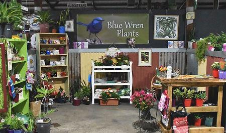 Blue Wren Plants_website stall pic.JPG