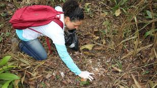 Crosta Negra: Comissão aposta na revitalização do solo como forma de acabar com a doença