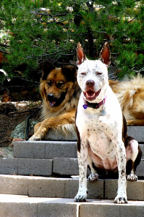 44 BELLA ISSAC new puppy friendships