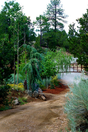 18 DogForest driveway at Security Entrance Gate