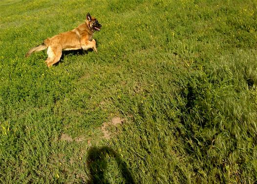 21 Summer Meadow playtime