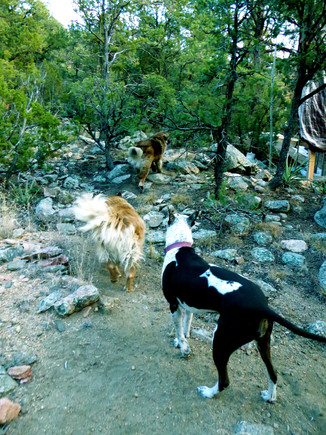 13 Olive taking the trail lead leash free hiking