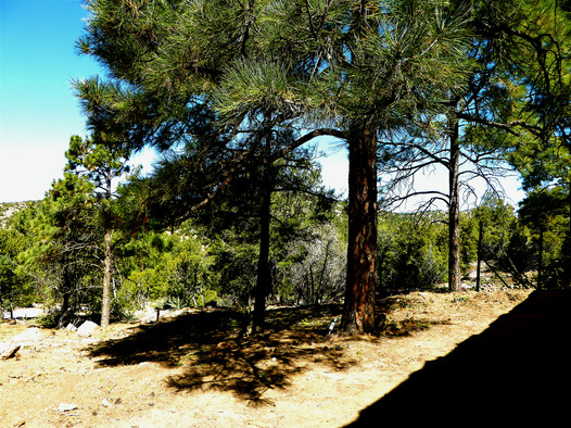 05 Ponderosa Forest at Front Japanese Puppy Gate