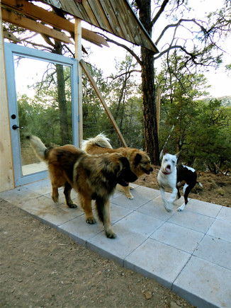 09 New Greetings at Japanese Puppy Drop Off Gate
