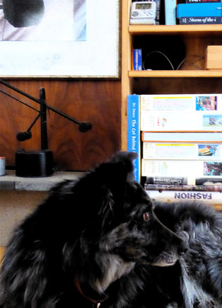 30 TOKO in library at DOGFOREST