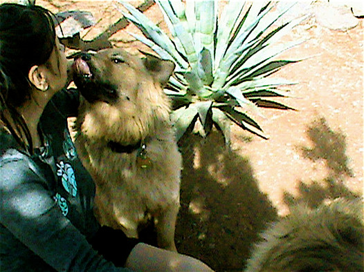 37 TEKAYE ISSAC CACTUS love in the morning forest hike