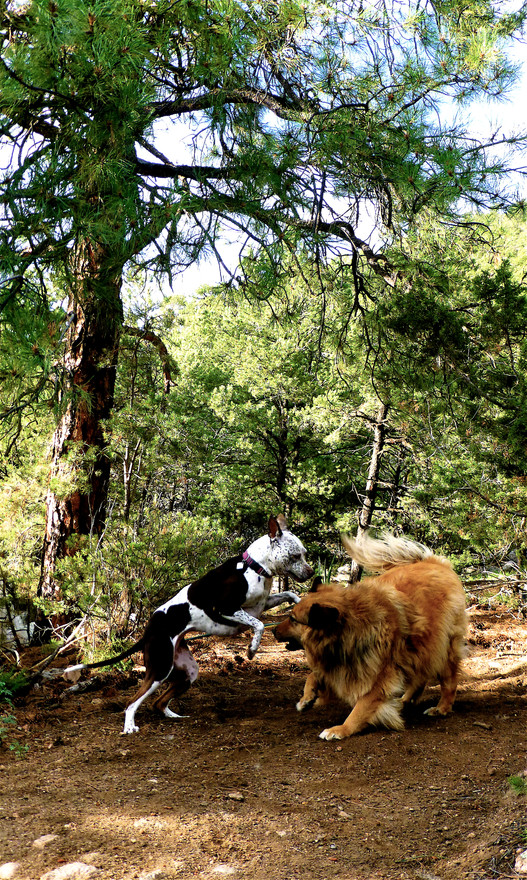 24 BELLA Issac ponderosa forest playtime