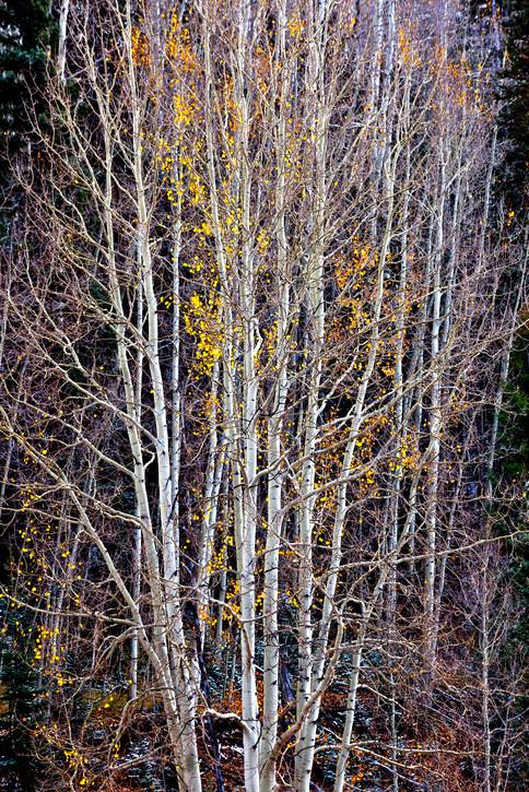 Taos and Beyond- 33
