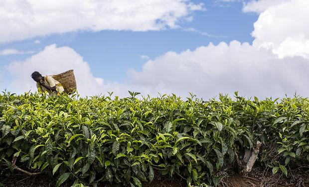 Kenya Photo 2.jpg