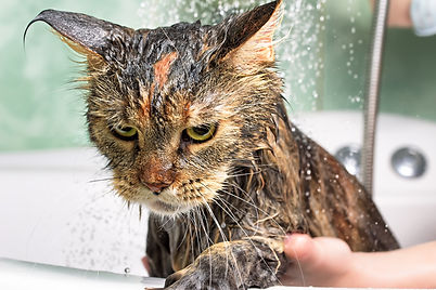 Soaked Cat.jpg