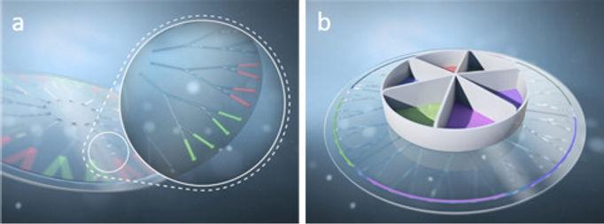 Modell Organ on a Chip, Teaser Physikali