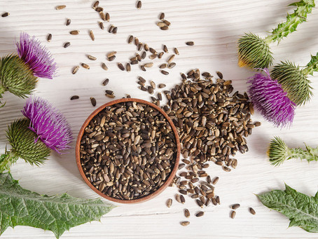 Milk Thistle most powerful liver tonic