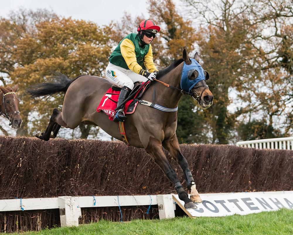 horse, horse racing