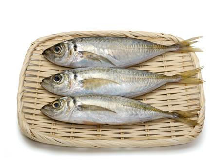 ◇◆ 魚介専門講座(アジの三枚おろし) ◆◇
